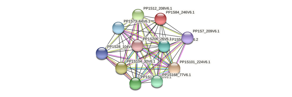PP1S84_246V6.1 protein (Physcomitrella patens) - STRING interaction network