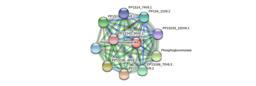 hxk5 protein (Physcomitrella patens) - STRING interaction network