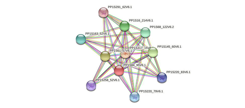 PP1S84_95V6.1 protein (Physcomitrella patens) - STRING interaction network