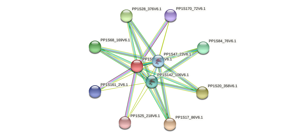 PP1S8563_1V6.1 protein (Physcomitrella patens) - STRING interaction network