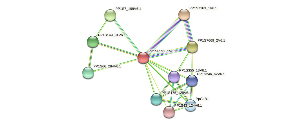 PP1S8591_1V6.1 protein (Physcomitrella patens) - STRING interaction network