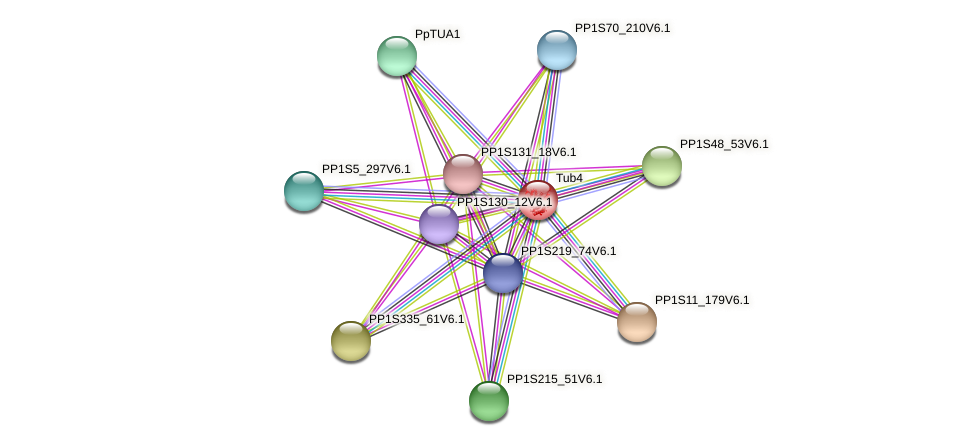 PP1S85_170V6.1 protein (Physcomitrella patens) - STRING interaction network