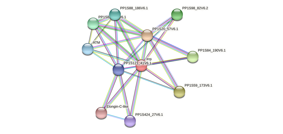lrrp protein (Physcomitrella patens) - STRING interaction network