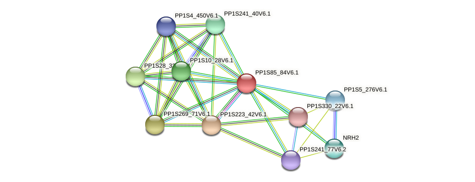 PP1S85_84V6.1 protein (Physcomitrella patens) - STRING interaction network