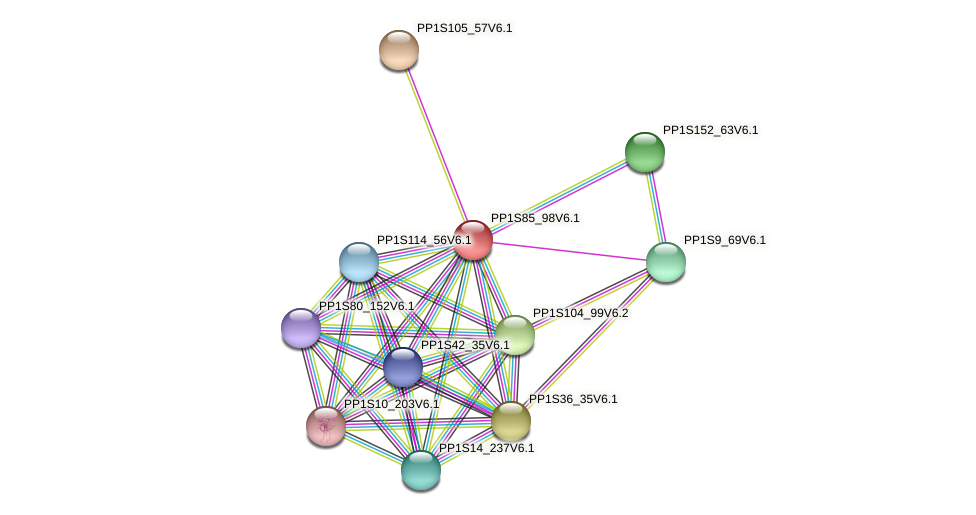 PP1S85_98V6.1 protein (Physcomitrella patens) - STRING interaction network