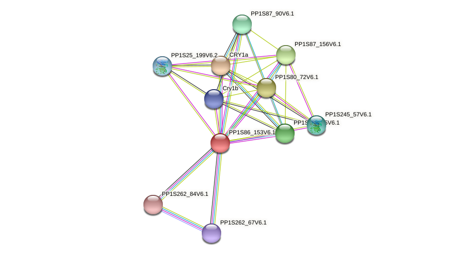 PP1S86_153V6.1 protein (Physcomitrella patens) - STRING interaction network
