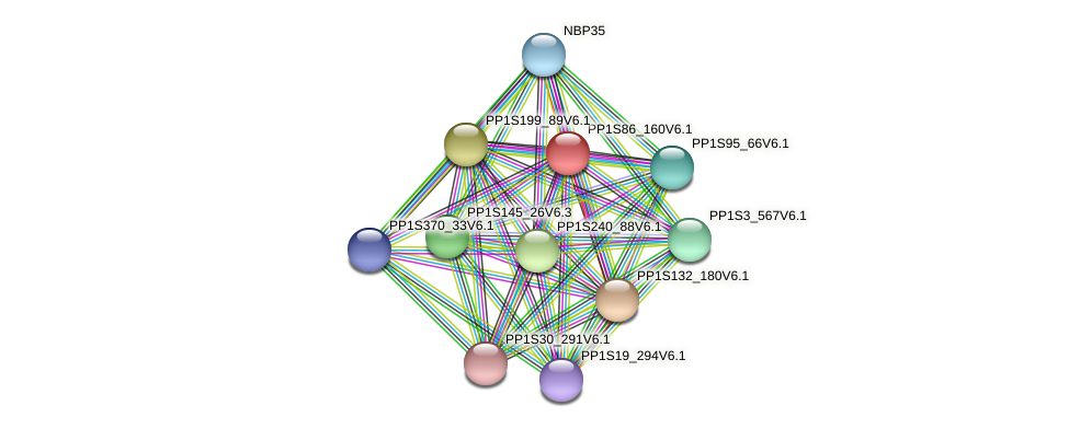 PP1S86_160V6.1 protein (Physcomitrella patens) - STRING interaction network