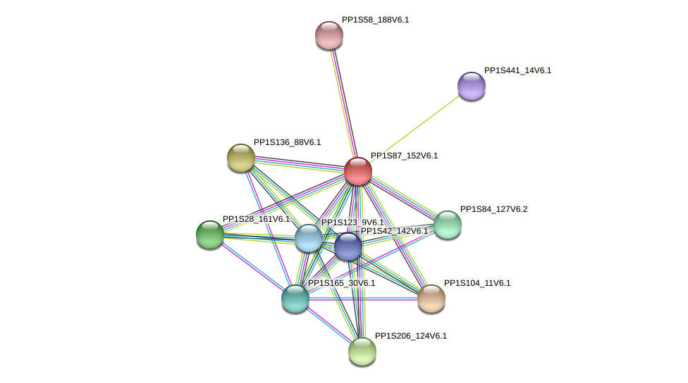 PP1S87_152V6.1 protein (Physcomitrella patens) - STRING interaction network