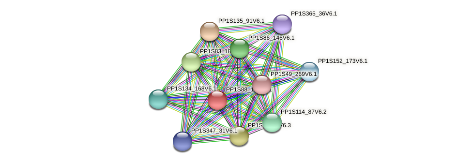 PP1S88_135V6.1 protein (Physcomitrella patens) - STRING interaction network