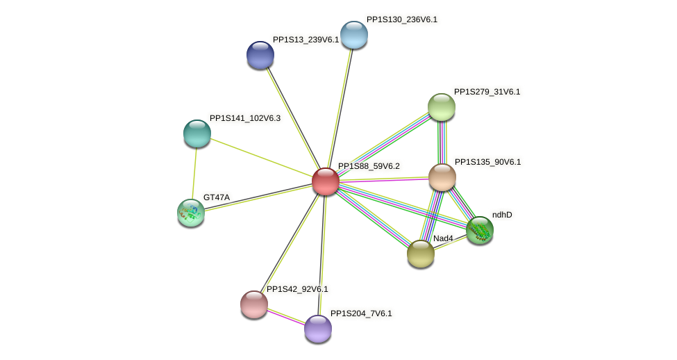 PP1S88_59V6.2 protein (Physcomitrella patens) - STRING interaction network