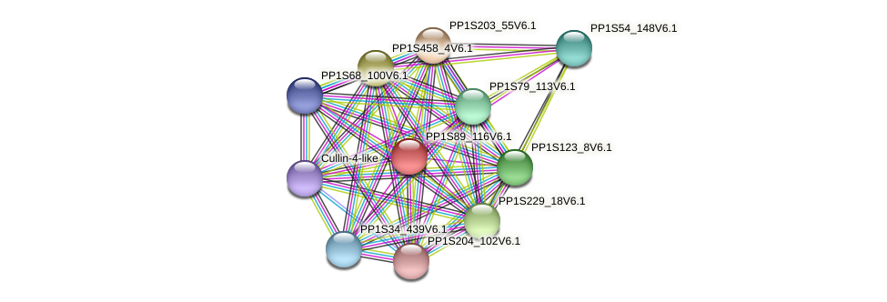 PP1S89_116V6.1 protein (Physcomitrella patens) - STRING interaction network