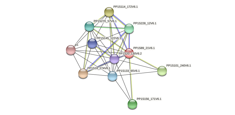 PP1S89_21V6.1 protein (Physcomitrella patens) - STRING interaction network