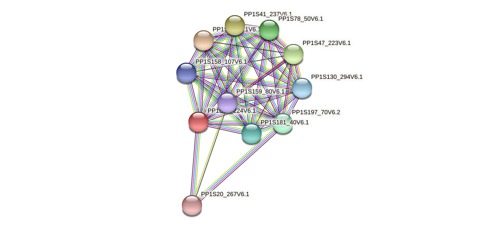 PP1S89_224V6.1 protein (Physcomitrella patens) - STRING interaction network