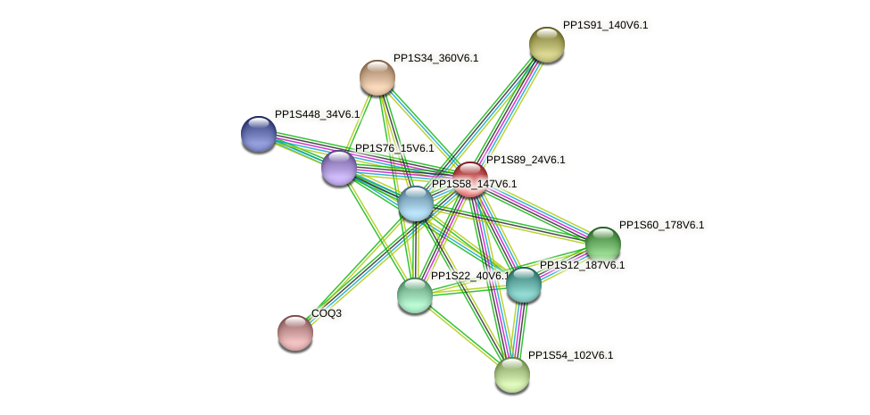 PP1S89_24V6.1 protein (Physcomitrella patens) - STRING interaction network