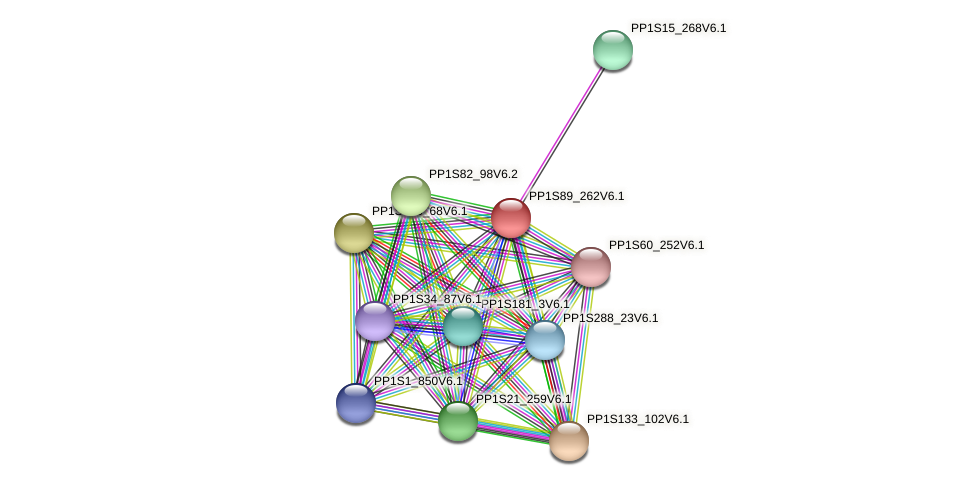 PP1S89_262V6.1 protein (Physcomitrella patens) - STRING interaction network