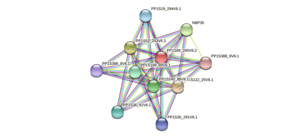PP1S89_265V6.1 protein (Physcomitrella patens) - STRING interaction network