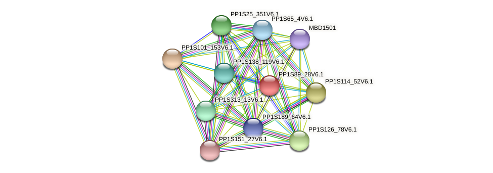 PP1S89_28V6.1 protein (Physcomitrella patens) - STRING interaction network
