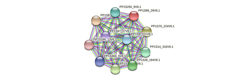 PP1S89_29V6.1 protein (Physcomitrella patens) - STRING interaction network