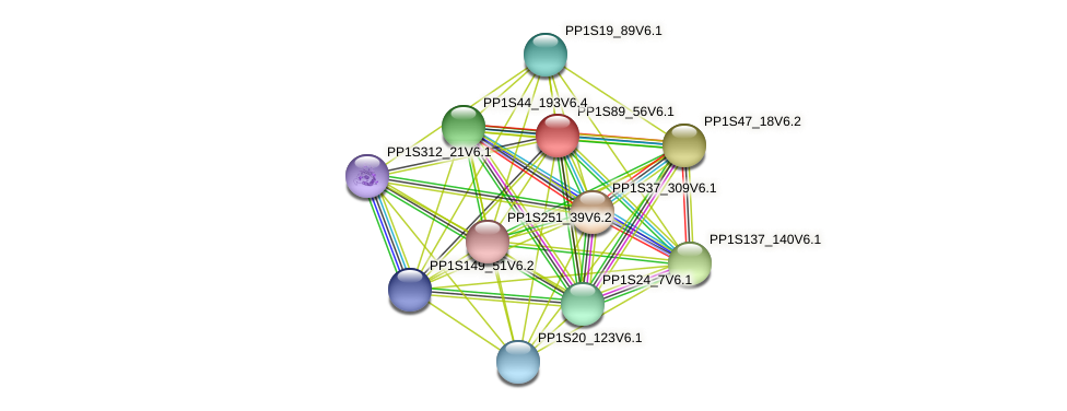 PP1S89_56V6.1 protein (Physcomitrella patens) - STRING interaction network