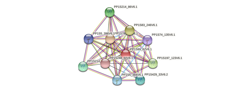 PP1S89_62V6.1 protein (Physcomitrella patens) - STRING interaction network