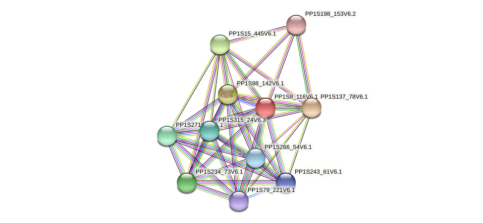PP1S8_116V6.1 protein (Physcomitrella patens) - STRING interaction network