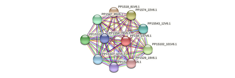 PP1S8_147V6.1 protein (Physcomitrella patens) - STRING interaction network