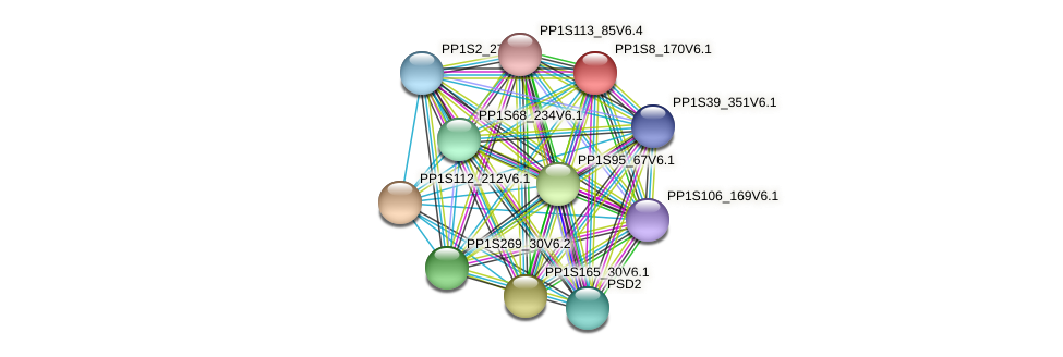 PP1S8_170V6.1 protein (Physcomitrella patens) - STRING interaction network
