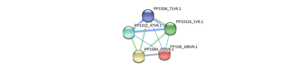 PP1S8_186V6.1 protein (Physcomitrella patens) - STRING interaction network
