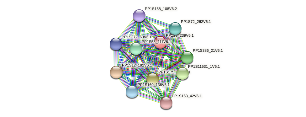 PP1S8_239V6.1 protein (Physcomitrella patens) - STRING interaction network