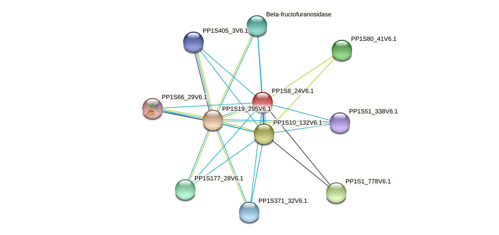 PP1S8_24V6.1 protein (Physcomitrella patens) - STRING interaction network