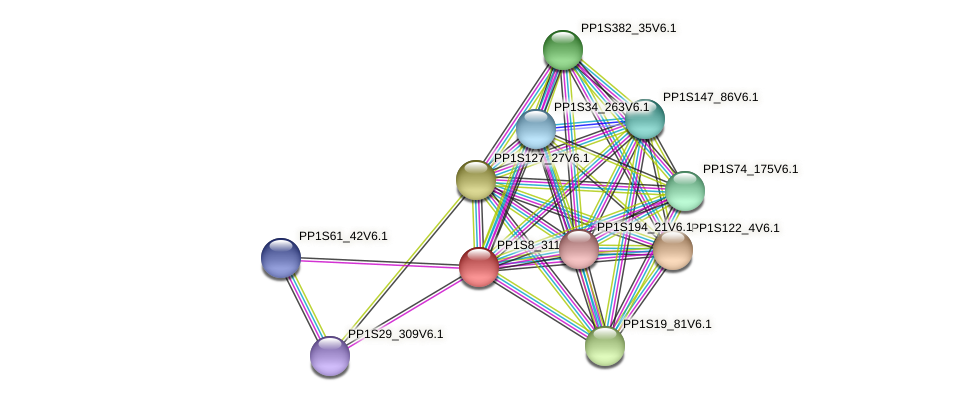 PP1S8_311V6.1 protein (Physcomitrella patens) - STRING interaction network