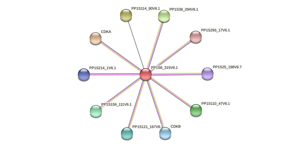 PP1S8_315V6.1 protein (Physcomitrella patens) - STRING interaction network