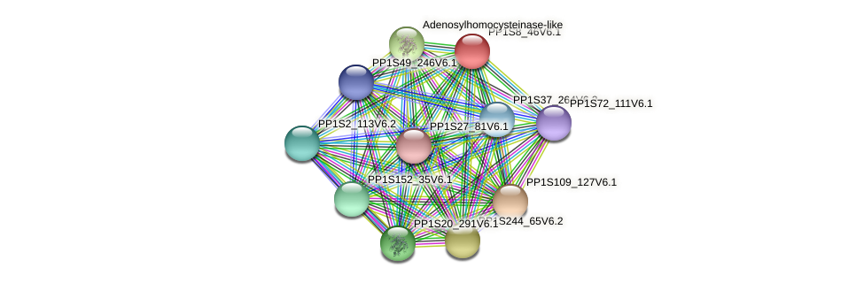 PP1S8_46V6.1 protein (Physcomitrella patens) - STRING interaction network