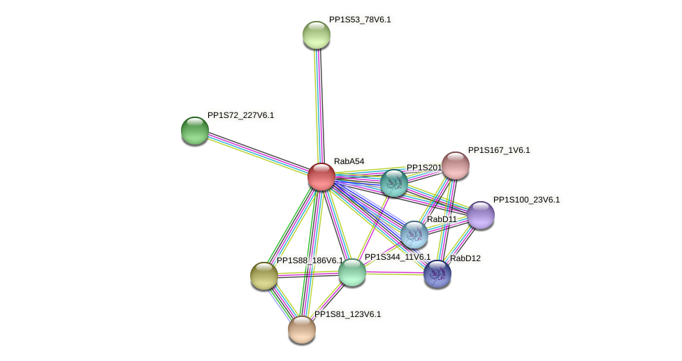 RabA54 protein (Physcomitrella patens) - STRING interaction network