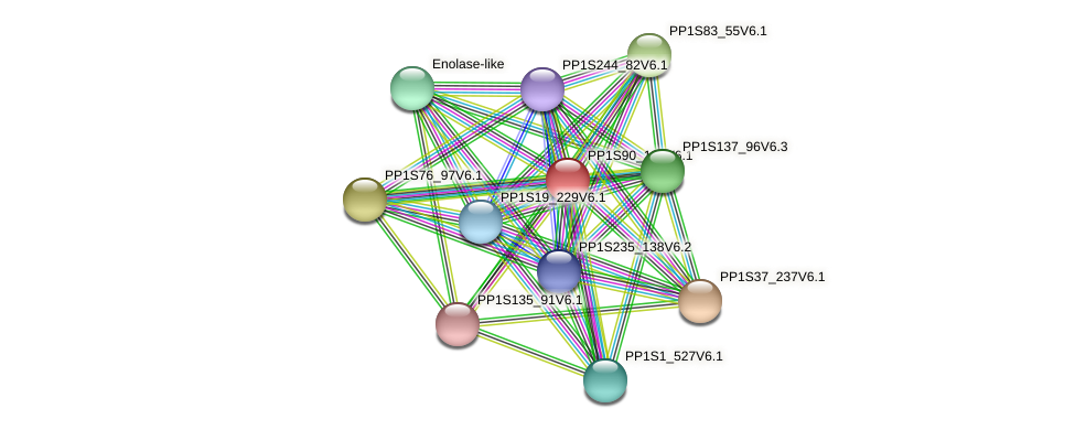 PP1S90_134V6.1 protein (Physcomitrella patens) - STRING interaction network