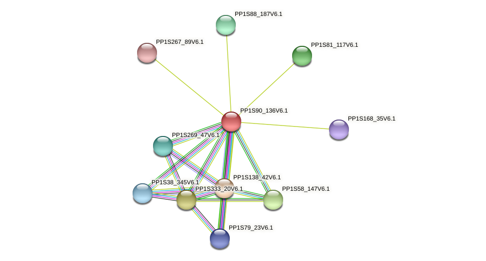 PP1S90_136V6.1 protein (Physcomitrella patens) - STRING interaction network