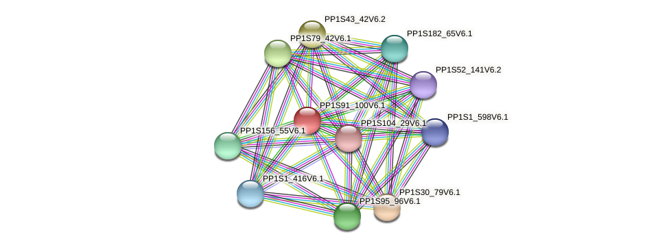 PP1S91_100V6.1 protein (Physcomitrella patens) - STRING interaction network