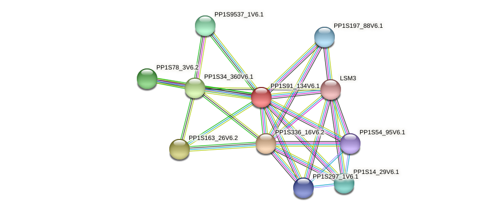 PP1S91_134V6.1 protein (Physcomitrella patens) - STRING interaction network
