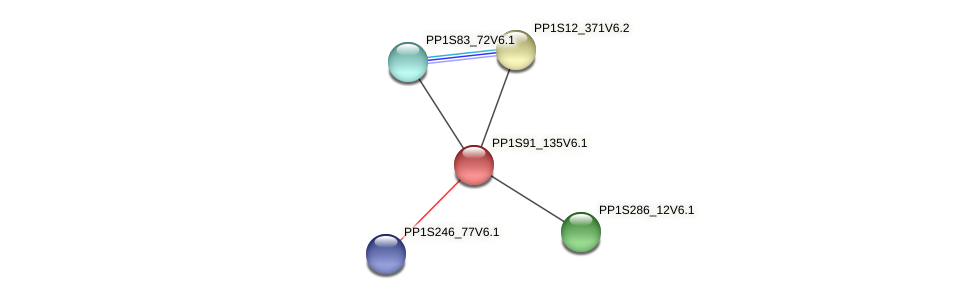 PP1S91_135V6.1 protein (Physcomitrella patens) - STRING interaction network