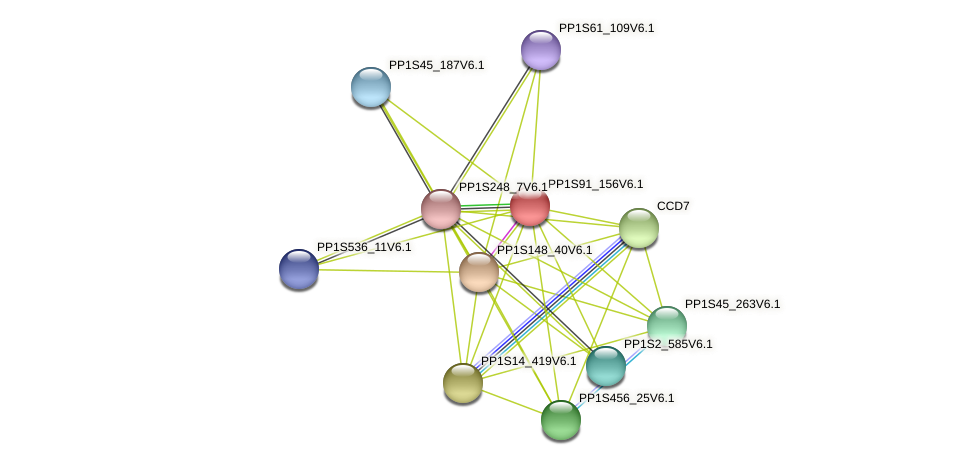 PP1S91_156V6.1 protein (Physcomitrella patens) - STRING interaction network