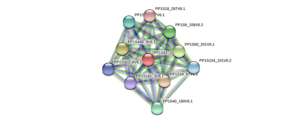 PP1S91_206V6.1 protein (Physcomitrella patens) - STRING interaction network