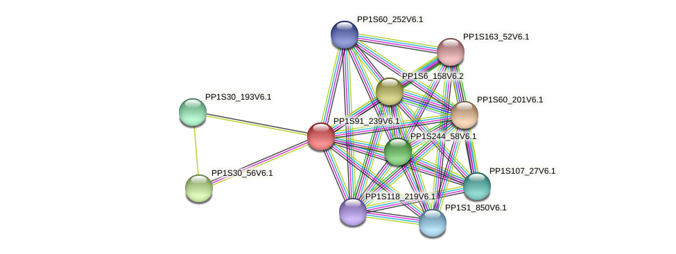PP1S91_239V6.1 protein (Physcomitrella patens) - STRING interaction network