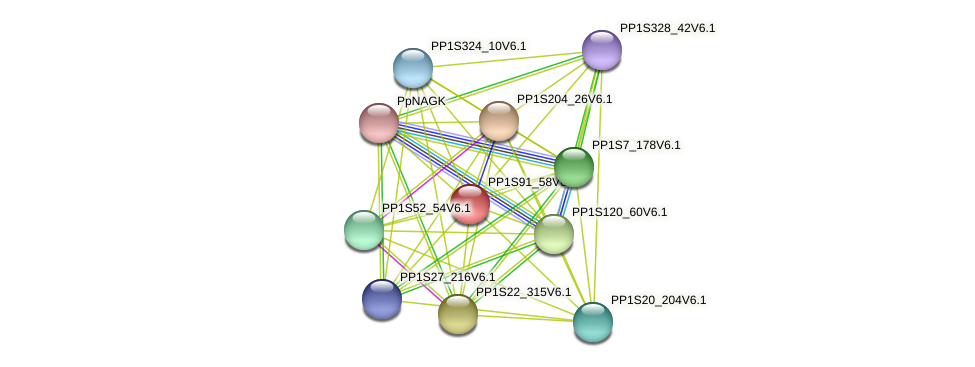 PP1S91_58V6.1 protein (Physcomitrella patens) - STRING interaction network