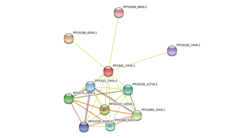 PP1S91_74V6.1 protein (Physcomitrella patens) - STRING interaction network