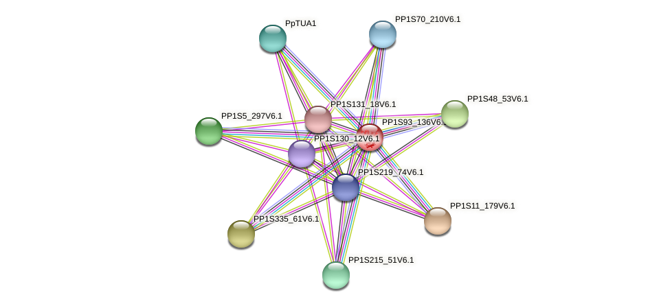 Tub5 protein (Physcomitrella patens) - STRING interaction network
