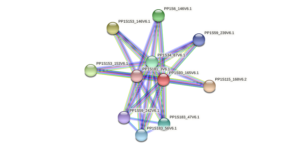 PP1S93_165V6.1 protein (Physcomitrella patens) - STRING interaction network