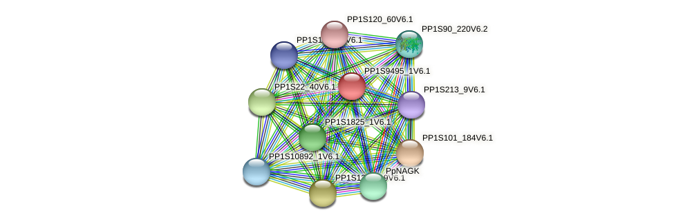PP1S9495_1V6.1 protein (Physcomitrella patens) - STRING interaction network