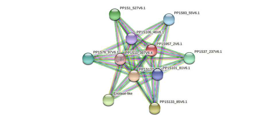 PP1S957_2V6.1 protein (Physcomitrella patens) - STRING interaction network