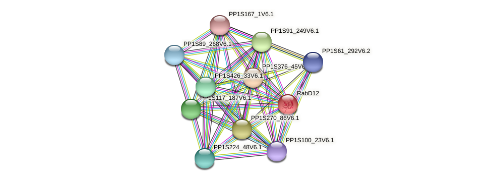 RabD12 protein (Physcomitrella patens) - STRING interaction network