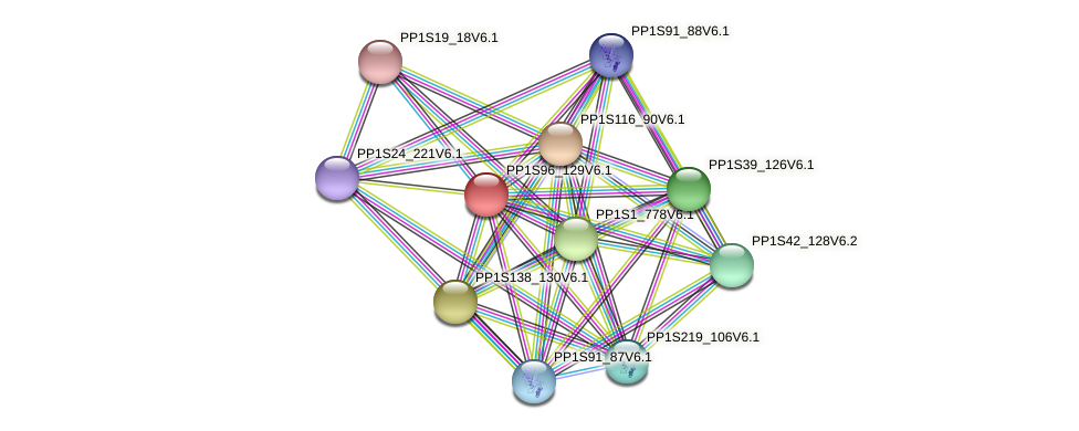 PP1S96_129V6.1 protein (Physcomitrella patens) - STRING interaction network